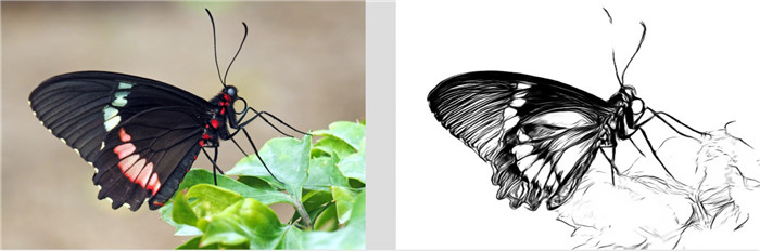 butterfly-line-drawing-2