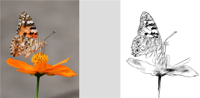 butterfly-line-drawing-3